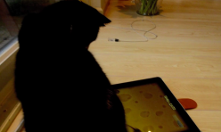 Addictive stress: a game for cats